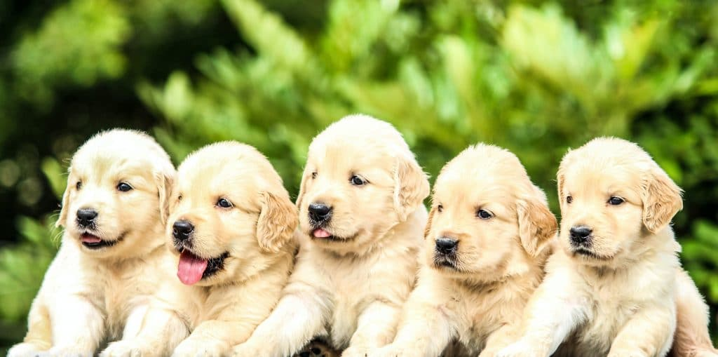 The cutest dogs!